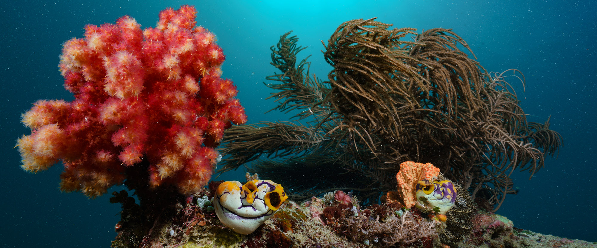scubadiving indonesia rote island nemberala underwater padi