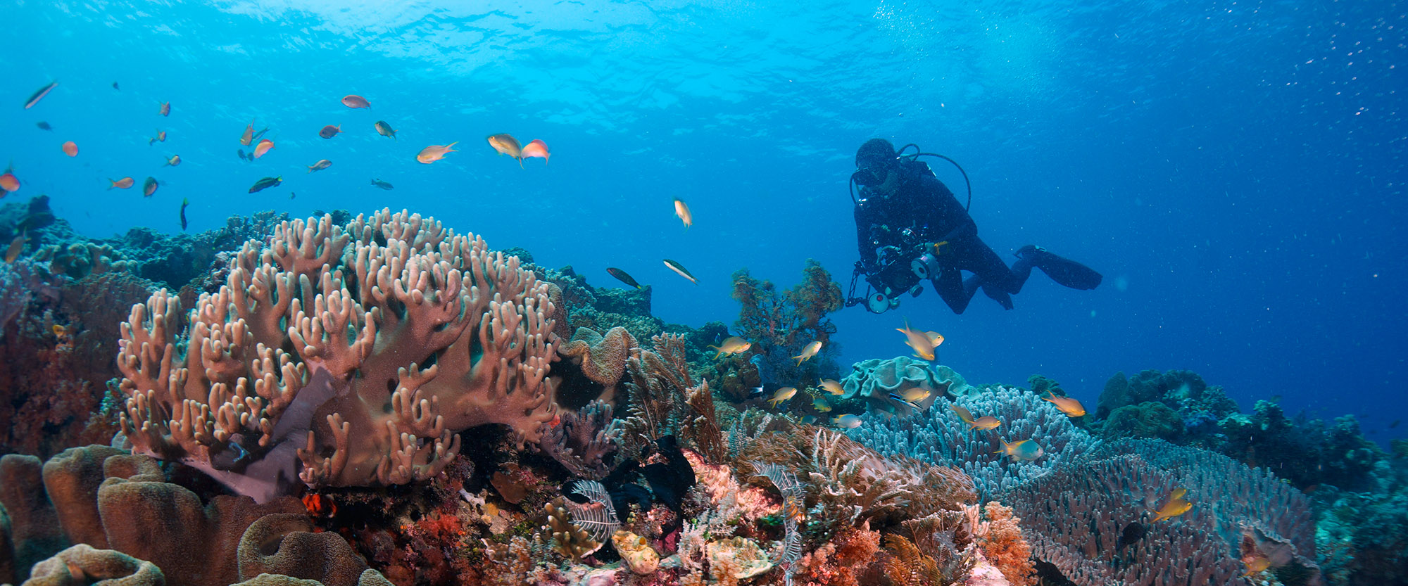 scubadiving diver underwaterphotography rote island indonesia padi