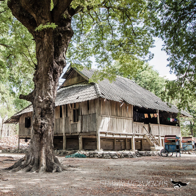 oldest house rote island traditional indonesia wood